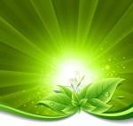 Green-Leaves-on-Burst-Background-Vector-Illustration